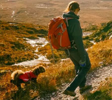 How to clean dog walking boots