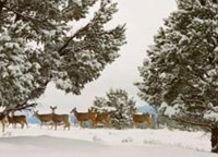 Deer stalking checklist