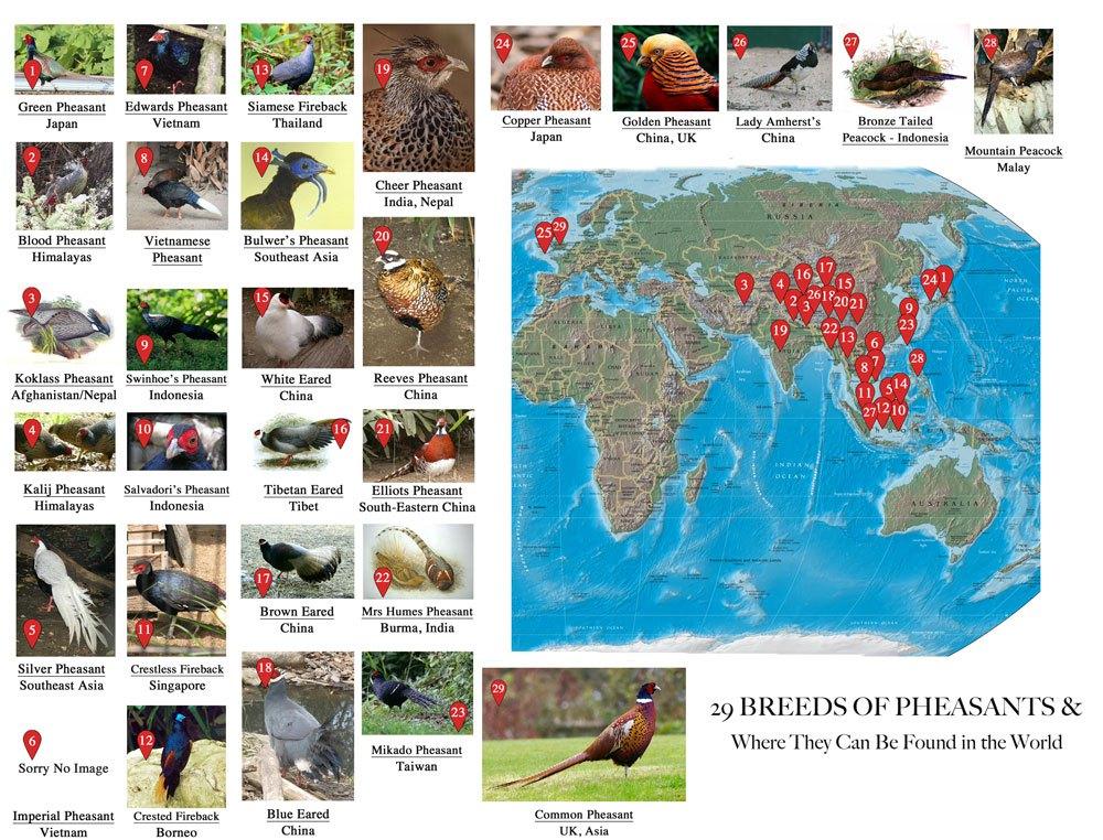 World Map of Pheasants